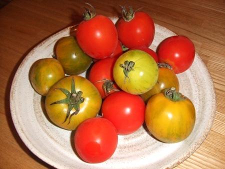 グリーントマト.jpg